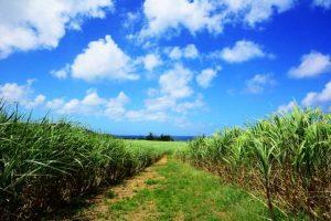 絶景スポット,さとうきび畑,satoukibi