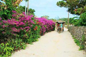 豊かな自然に囲まれ、たくさんの花が咲き誇る竹富島
