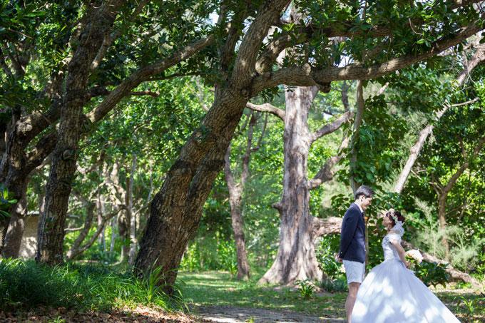 石垣島フォトウェディングの魅力はすぐ近くにあるモクマオウの林