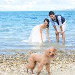 石垣島ビーチフォトウェディング 海の中から愛犬を呼んで