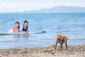 石垣島トラッシュザドレス ペットの犬も一緒にトラッシュ