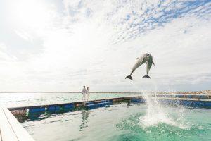 石垣島 イルカとフォトウェディング
