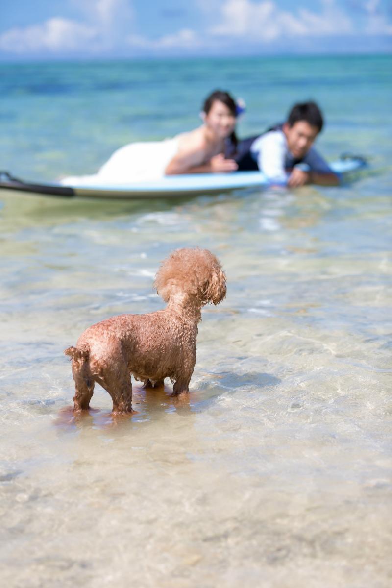 石垣島で愛犬と一緒にビーチフォトウェディング