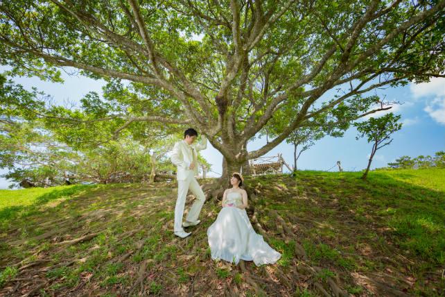 ビオスの丘では大きな木の下で撮影