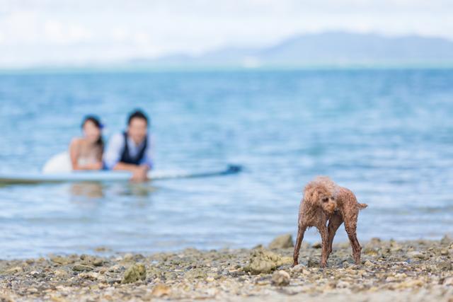 愛犬と一緒にトラッシュドレスのウェディングショット|沖縄ウェディングオンライン