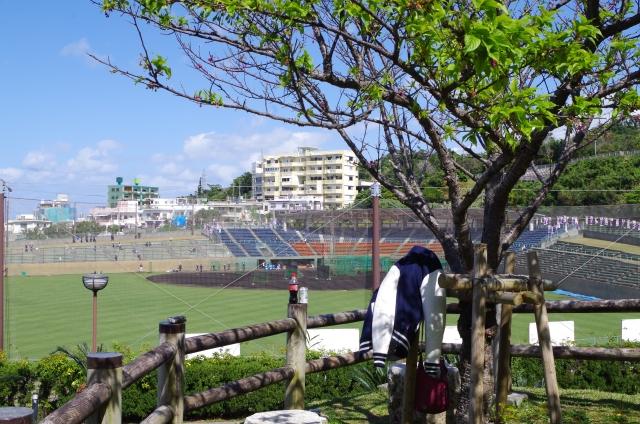 2020年 沖縄本島 プロ野球春季キャンプの試合情報