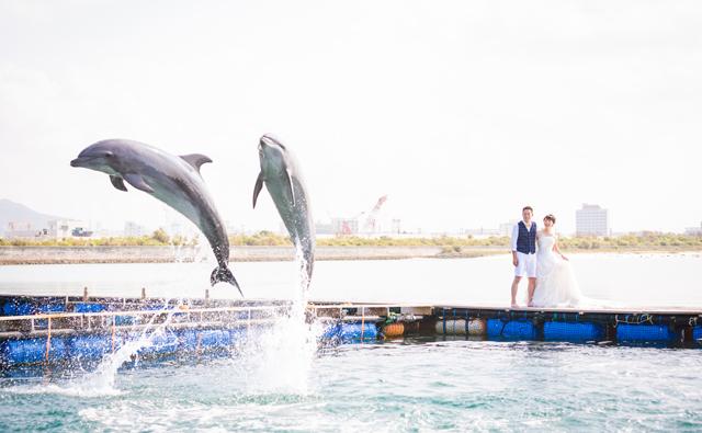 イルカと一緒にフォトウェディング|沖縄ウェディングオンライン
