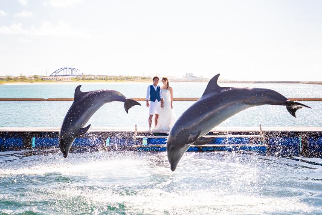石垣島イルカと一緒に撮影フォトウェディング 沖縄ウェディングオンライン